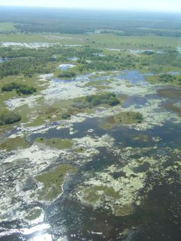 The wetlands as seen from the air, Olivia N - August 2009