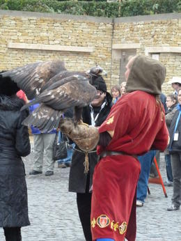 Have your picture taken with a falcon! , Ruth G - October 2011