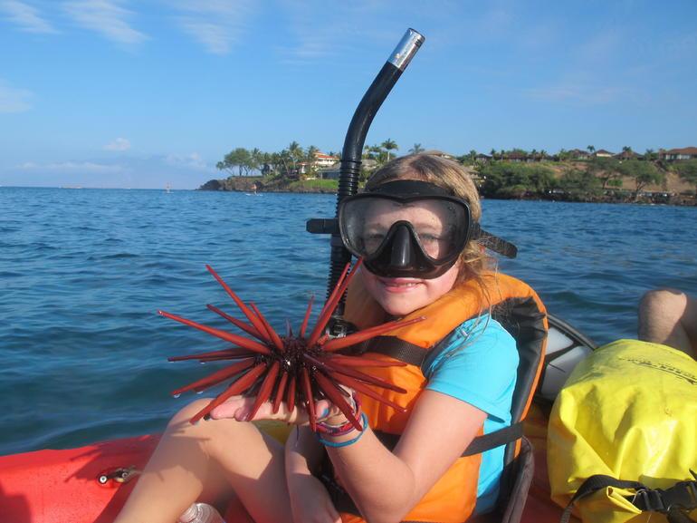 Sea Urchin - Maui