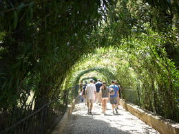 Tree tunnel in the gardens, Laura All Over - August 2014