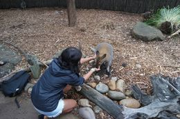 Getting to feed a very friendly wallaby. , Heidi P - April 2015