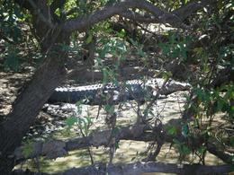 A 4.5 meter crocodile!, Olivia N - August 2009