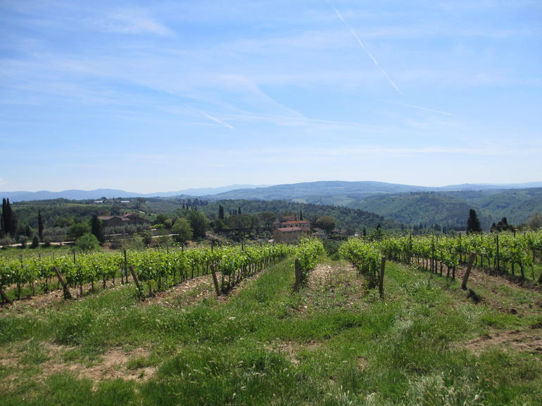 Semi-Private Horses and Vineyards - Horseback Riding in Tuscany