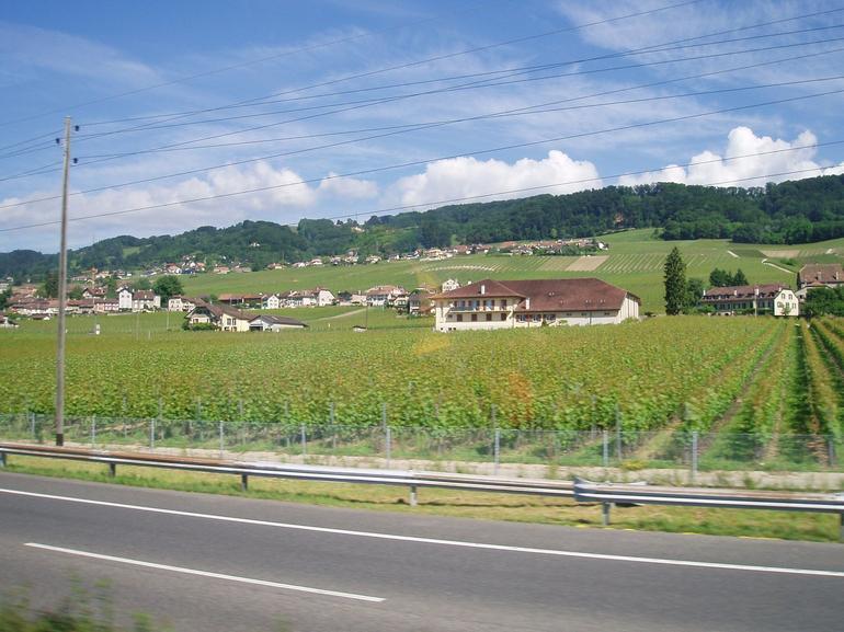Greeneries - Geneva