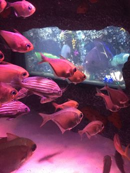 Fishes!, JennyC - July 2015