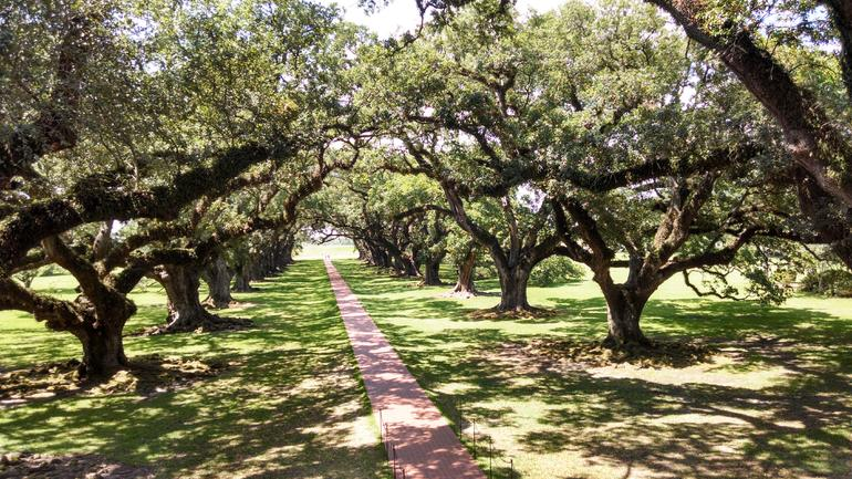 Oak Alley Plantation Tour photo 32