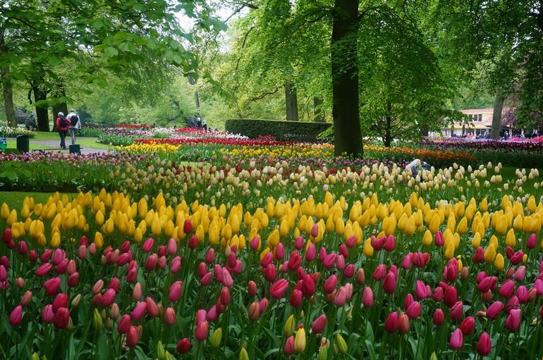 tulip fieeelds - Amsterdam