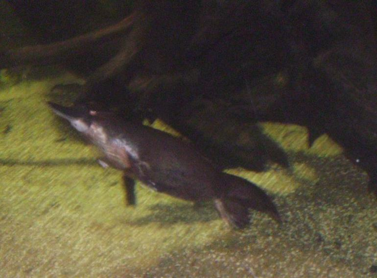 A platypus! - Sydney