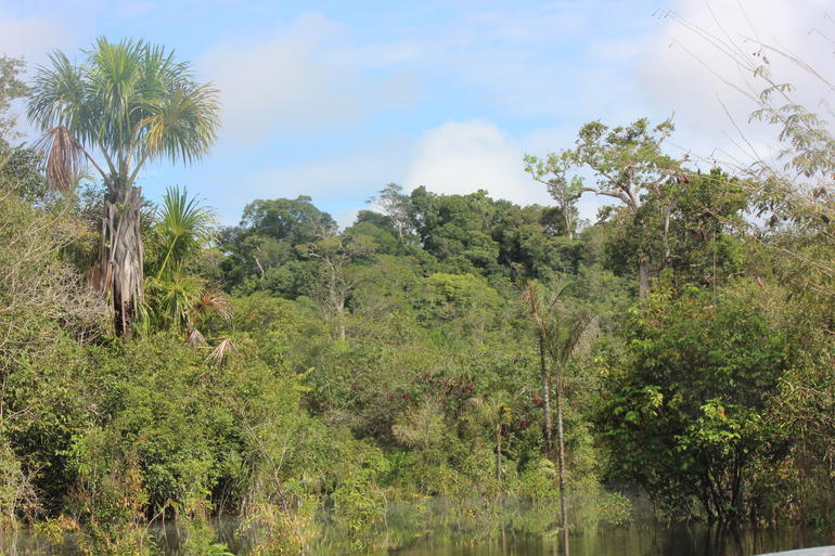 Amazon - Manaus