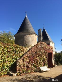 Nitray Vineyard grounds , Timothy B - October 2014