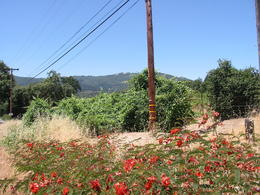 View from outside Vineyard , Clive R - June 2014