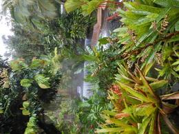 Amazing scene of the hot springs , Djenane f - December 2014