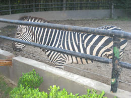 Kids were able to feed the zebra, was great!, Bandit - June 2012