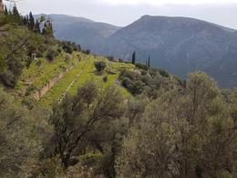 Beautiful Greece landscape near Delphs , Ramune M - February 2018