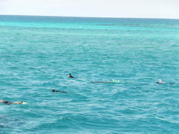 An absolutely amazing and fun time snorkeling at the Barrier Reef. I would do this again! , Caroline S - July 2013