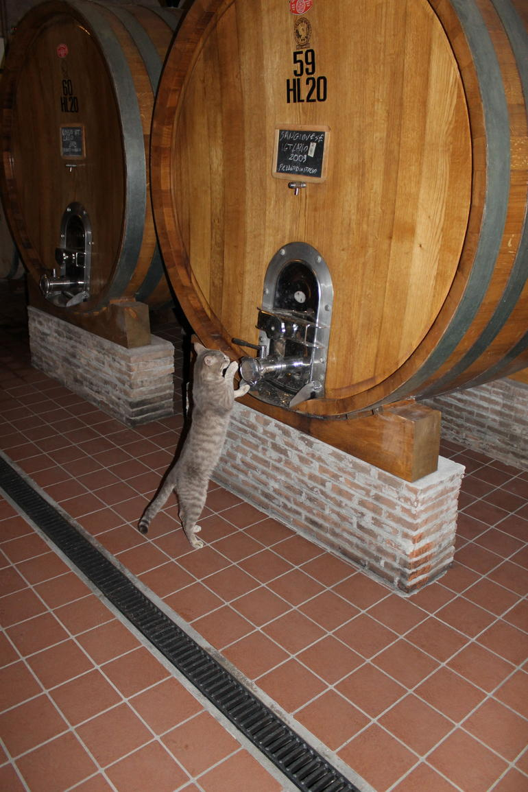The Vineyard Cat: who assists in every tour - Rome