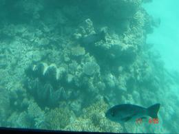 View of a nosy fish, on the submersible tour portion of the Great Barrier Reef cruise., Patricia J - November 2007
