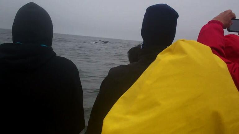 Whale Tail - San Francisco