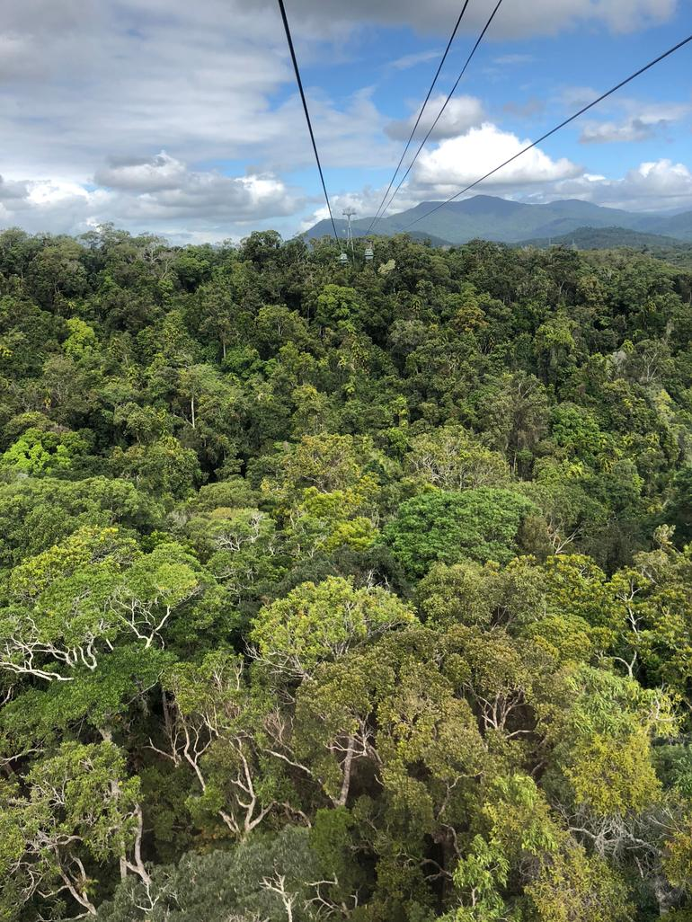 Skip the Line: Kuranda Scenic Railway Gold Class and Skyrail Rainforest Cableway photo 11