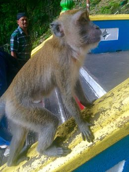 The monkeys are everywhere on the tour! Don't get too close, they can be aggressive. But they are so cute! , Abigail U - June 2015