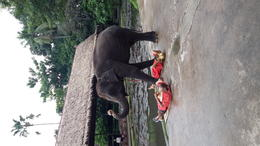 Elephant show , Joan T - December 2014