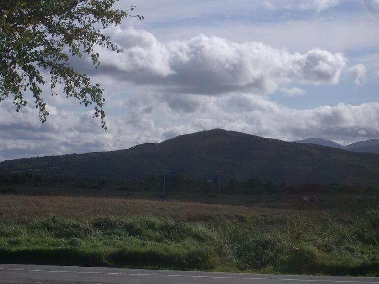 Scene from Kerry Bog - Dublin