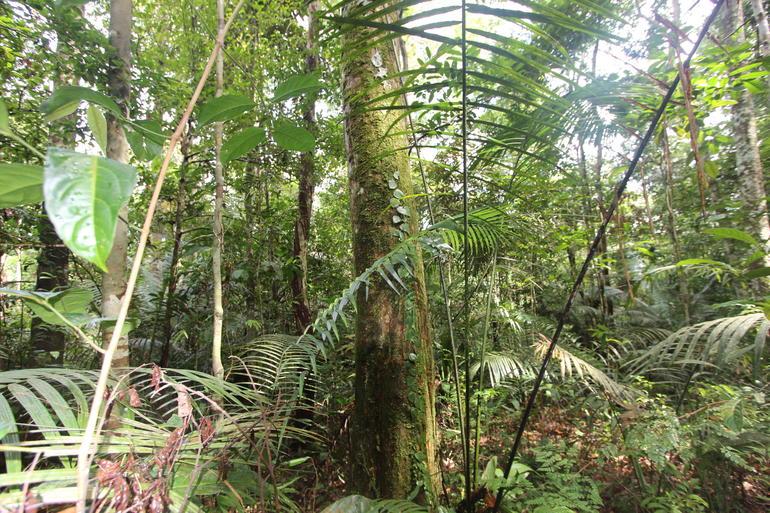 Trekking - Manaus