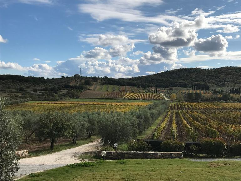 Super Tuscan Wines and Etruscan Cities Small Group Tour