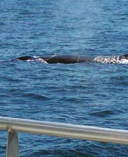 It was great to see some of the whales up close. , Debbie R - September 2015