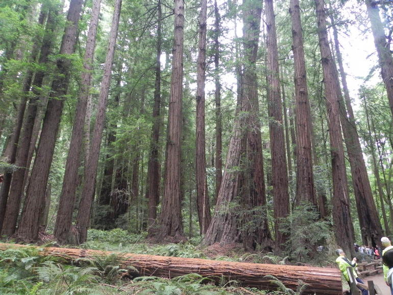excursion-demi-journee-a-giant-redwoods-et-sausalito