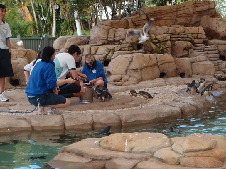 Feeding the penguins, Sea World - Brisbane