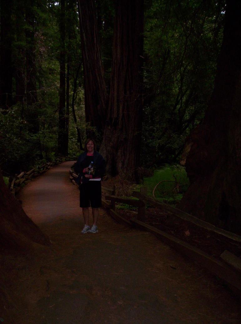 Inside Muir Woods - San Francisco