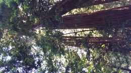 Muir Woods , John P - July 2015