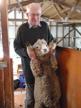 A picture of Ivor getting ready to shear a sheep., Maggie - April 2009