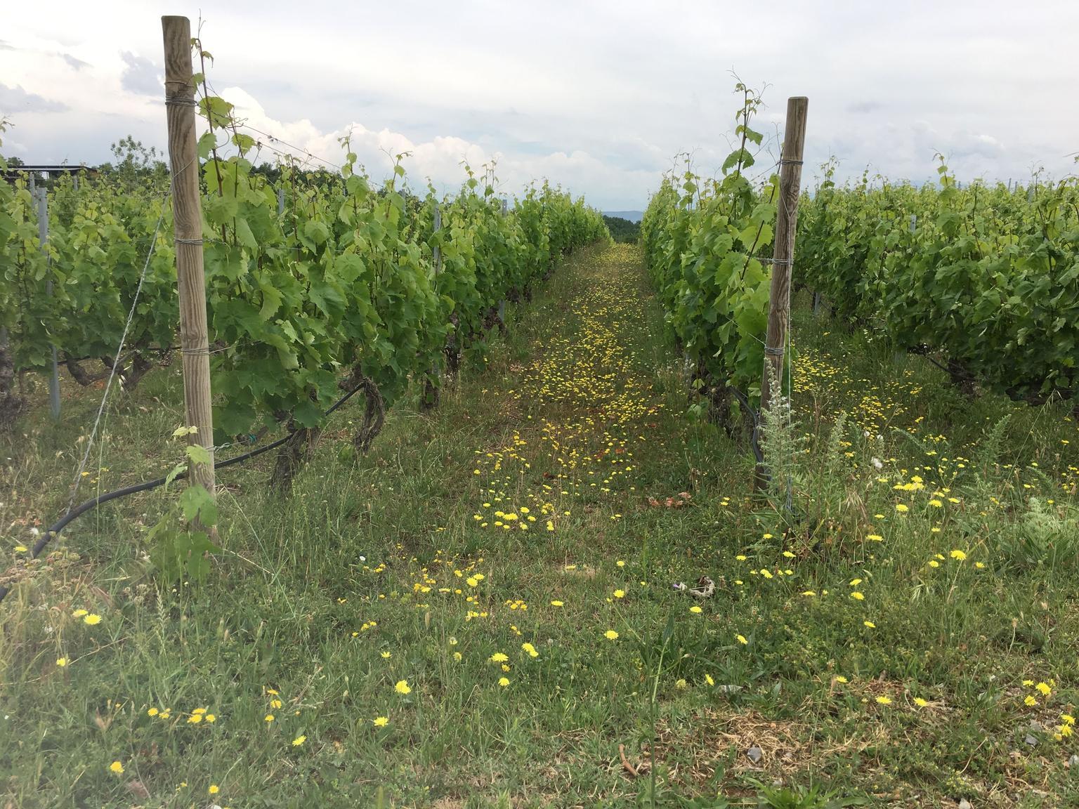 MÁS FOTOS, Recorrido de senderismo de un día con actividades vinícolas desde Naoussa - Tesalónica