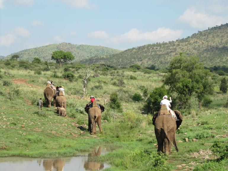 Elephant safari - Johannesburg