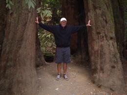 Fantastiska träd som jag håller i. , Leif O - September 2016