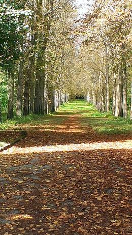 Beautiful path at Versailles , Hattie R - September 2013