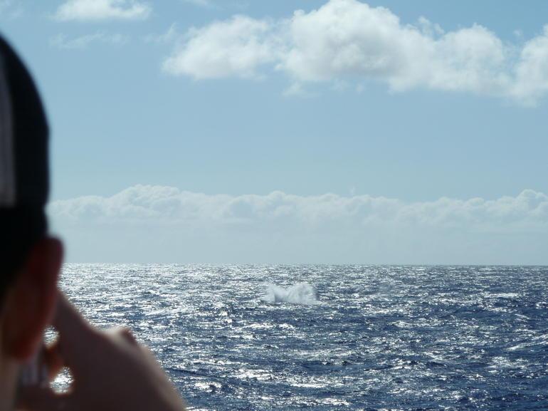 Playful Whales - Oahu
