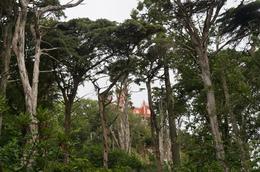 Through the trees., n.vickerman - August 2017