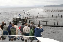 Tasmania has clear cold water, and its perfect for salmon farming. , RobC - December 2010