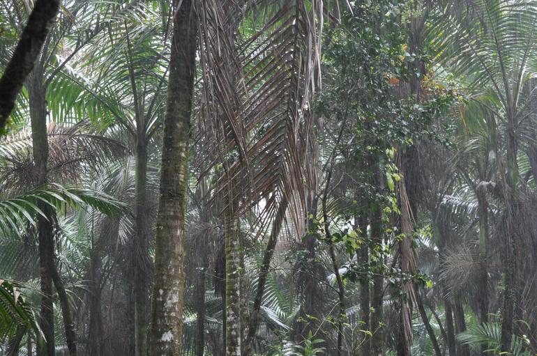 El Yunque Rainforest - San Juan