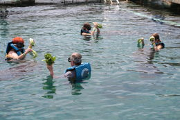 Steve, Linda, Shelby and Sydni feeding the Manatees. Family adventure that was so worth the trip. , Steven R - September 2015