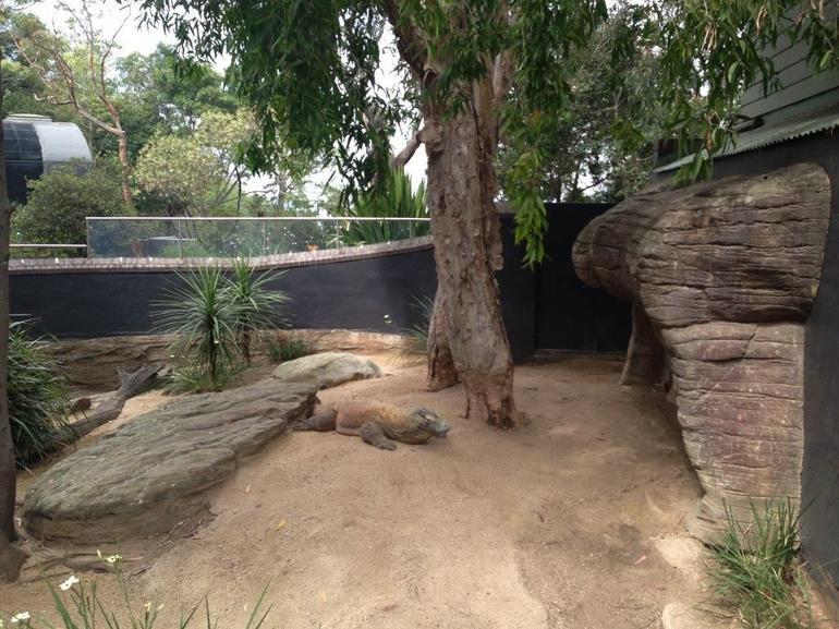Crocodile Area, Taronga Zoo - Sydney