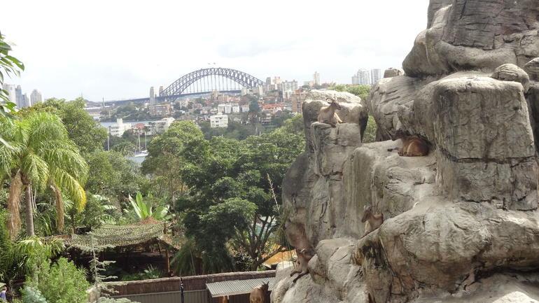 Great Views of the bridge! - Sydney