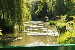 Monet's Waterlily garden, Aileen V - June 2008