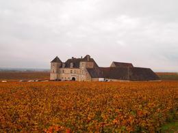 Morey-St-Denis, Rachel - November 2013