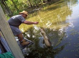 Feeding aligators on the Swamp Boat Cruise. - September 2009