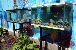 Fish tanks we found on our tour!, Jules & Brock - July 2012