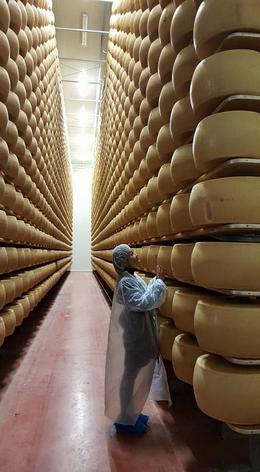 cheese factory , karen_chee - April 2017